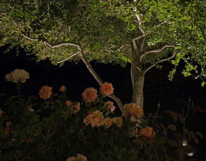 Mort's tree.jpg