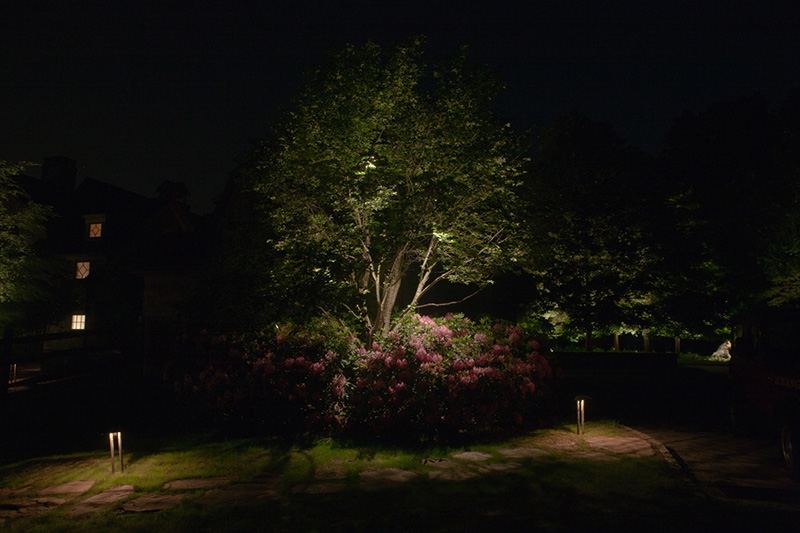 Tree-&-Rhodo-dnltg.jpg