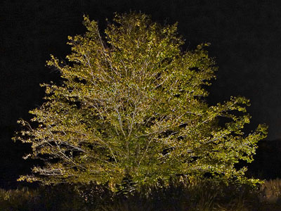 donor-tree-400-cropped.jpg