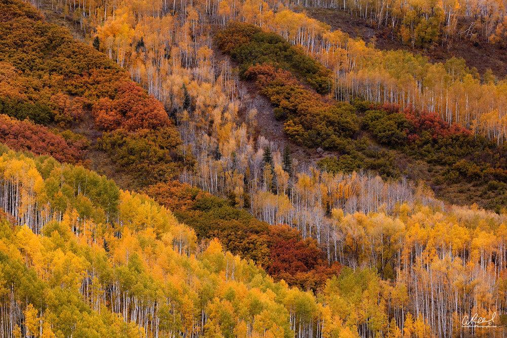 The Colors Of Colorado Web 2017.jpg