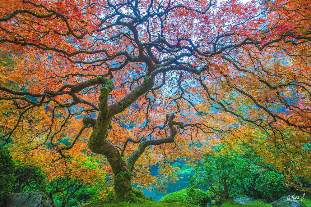 Peter Lik's Tree? No, It's Not.