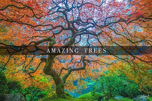 Fine Art Tree Photography Aaron Reed