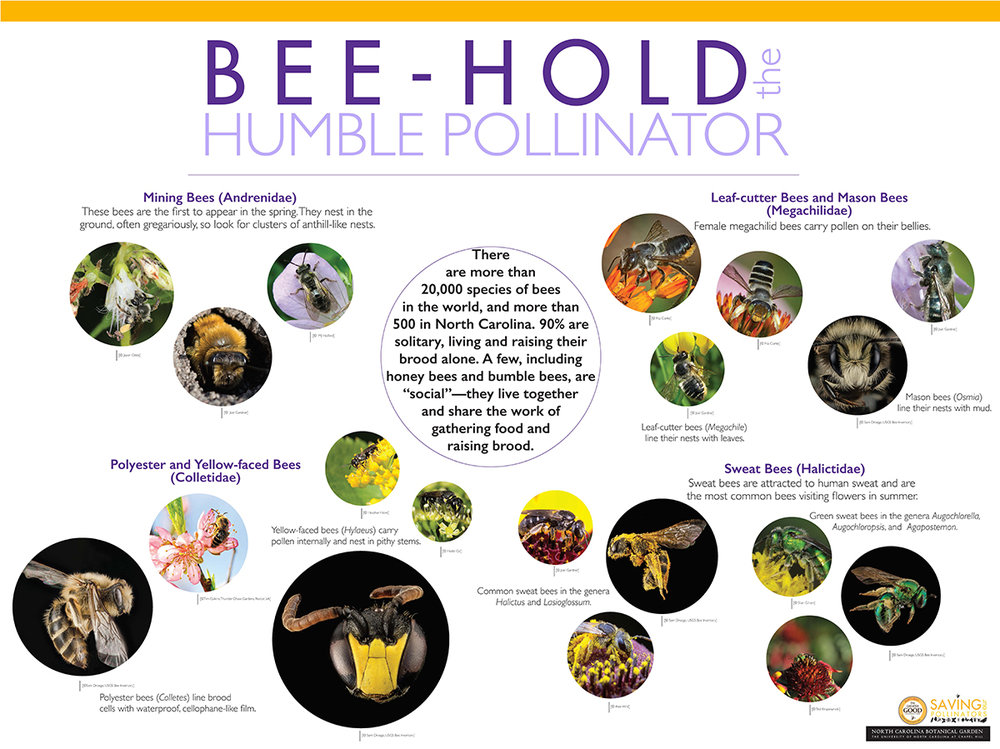NORTH CAROLINA BOTANICAL GARDEN BEE-HOLD THE HUMBLE POLLINATOR EXHIBIT