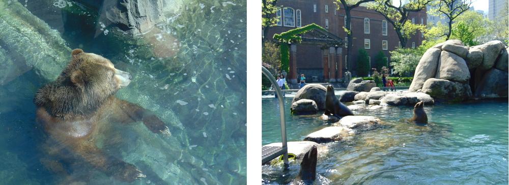 Wondering-Through-New-York-Central-Park-Zoo-Bear-Seals.JPG