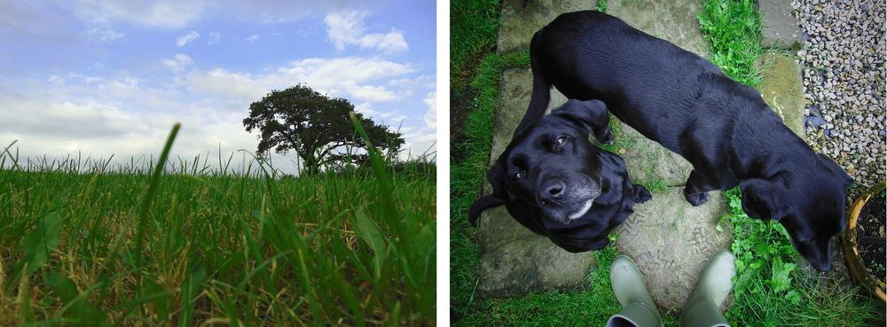 Wondering-Through-Devon-You're-Alright-Field-Dogs-Wellies.JPG