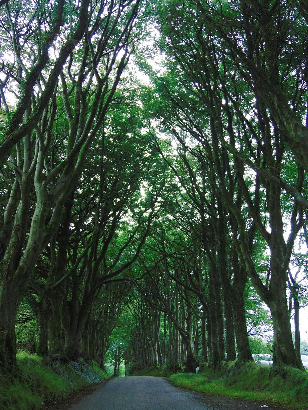 Wondering-Through-August-Favourites-Fangorn-Forest.JPG