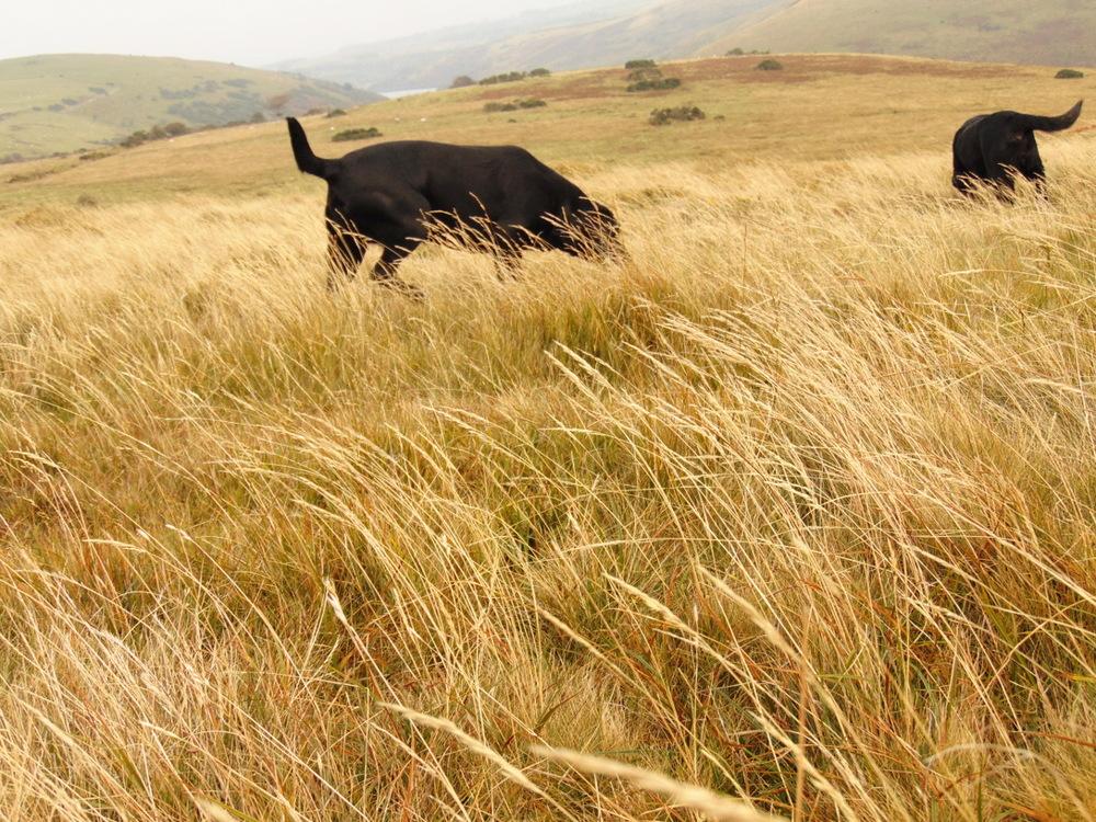 Wondering-Through-Autumnal-Days-Dogs.JPG