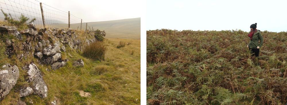 Wondering-Through-Autumnal-Days-Stone-Wall-Ferns-Me.JPG