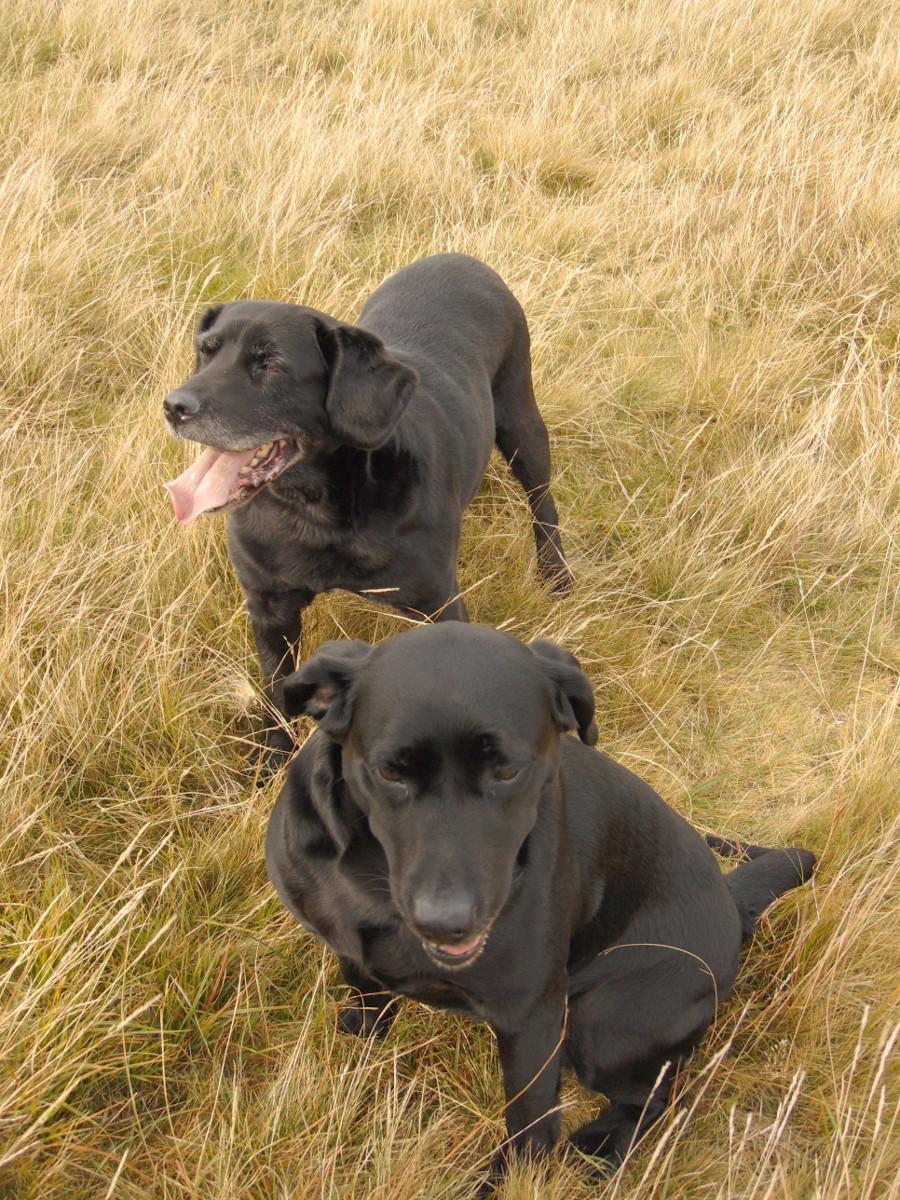 Wondering-Through-Autumnal-Days-Smiley-Dogs.JPG