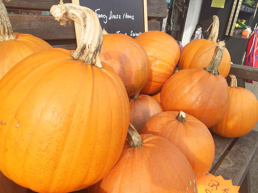 Wondering-Through-Life-As-It-Stands-Pumpkins.JPG