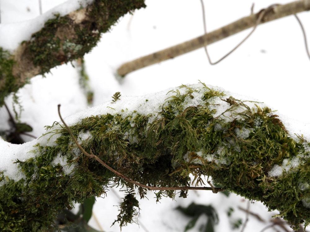 Wondering-Through-Snow-Days-Spring-Days-Edie-Puppy-Walks-Lifestyle-Blogger-Moss-Nature.JPG