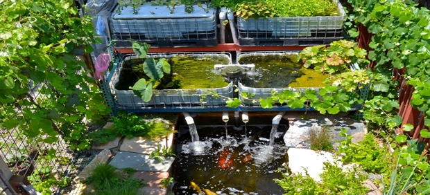 aquaponics-pond620_June2013.jpg