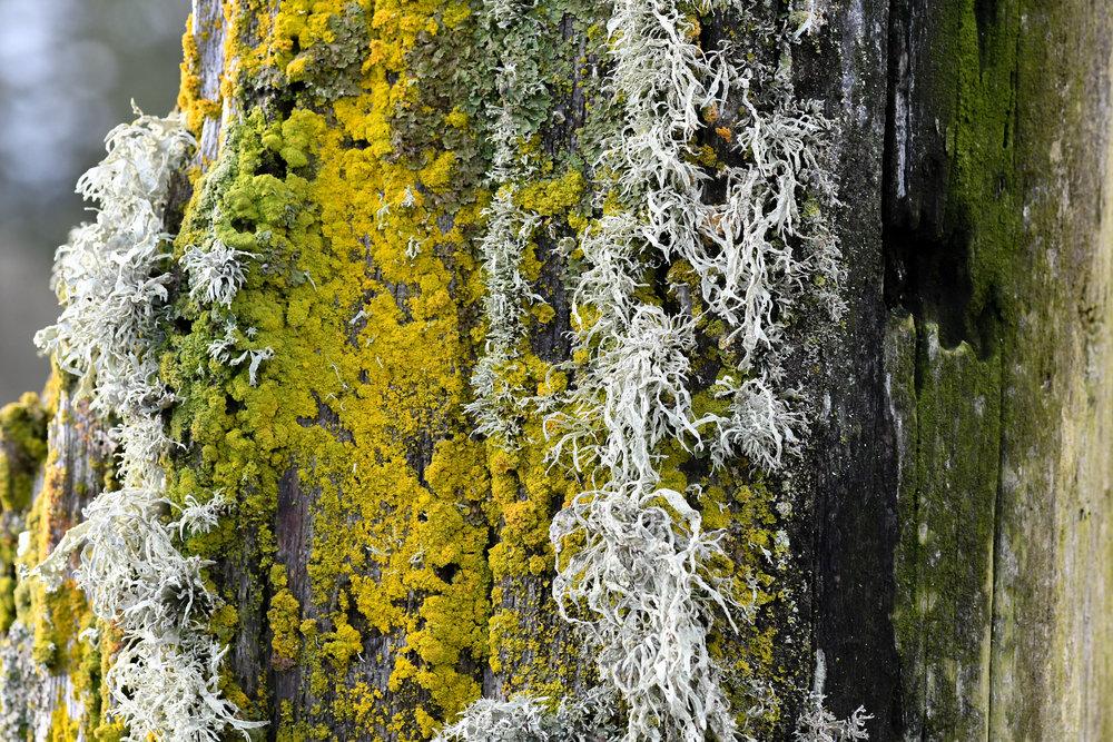 Moss, Marrowstone Island, 2017