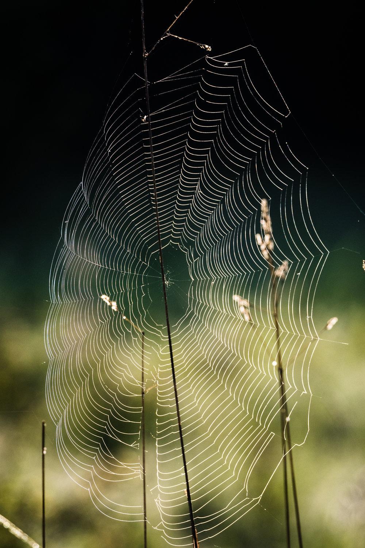 Spider web, Kai Tai Lagoon, 2018