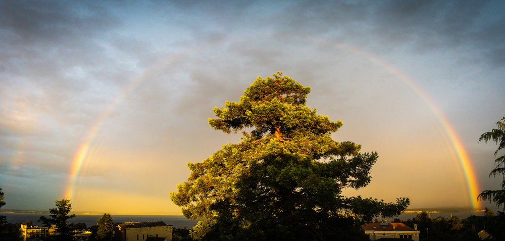 Redwood, 2018