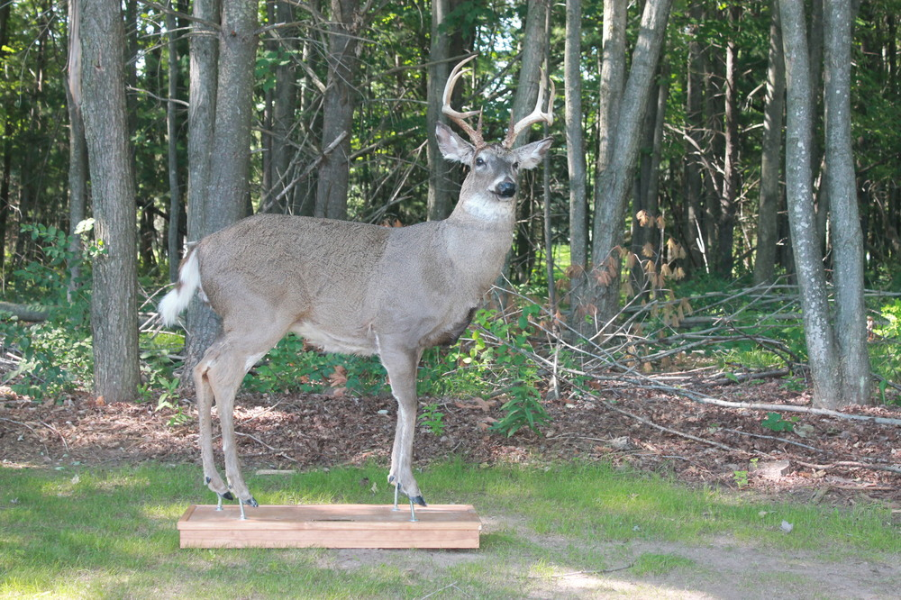 profile of a male deer for Robotic Decoys extra large whitetail deer decoy