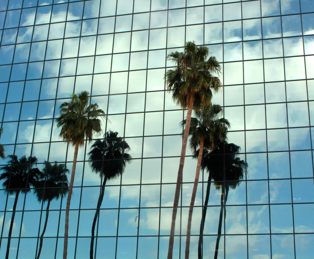 palm-trees-los-angeles