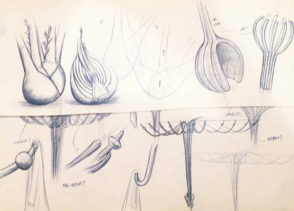 Fennel_sketches2.jpg