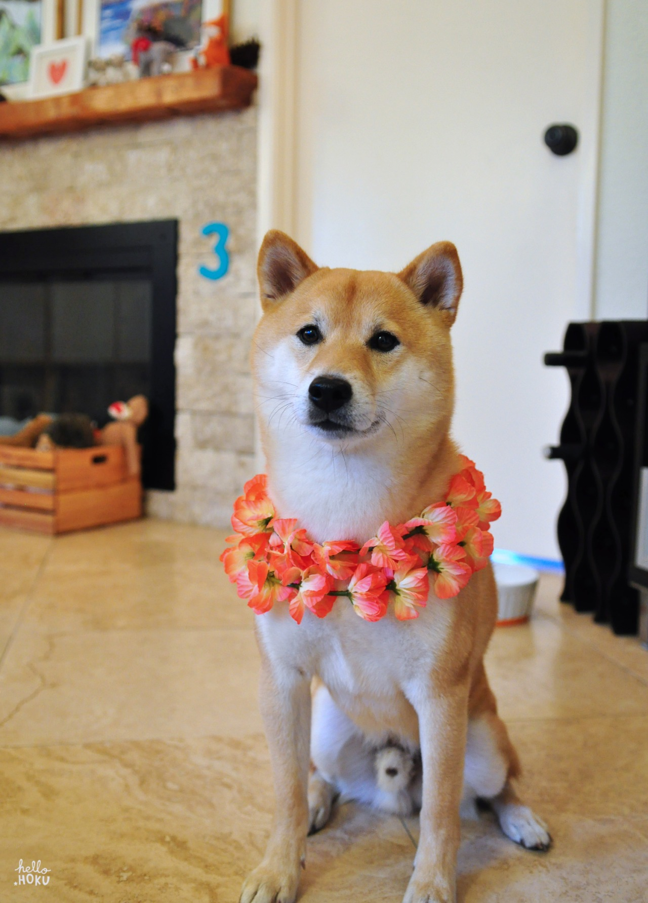 In true Hawaiian fashion, someone just got lei'd for his birthday. Happy 3rd birthday Hoku! Wishing you many more years of health and happiness with us. To celebrate, David will be making Hoku a delicious filet mignon for dinner. (We don't even eat steaks that good.) Lucky birthday dog!