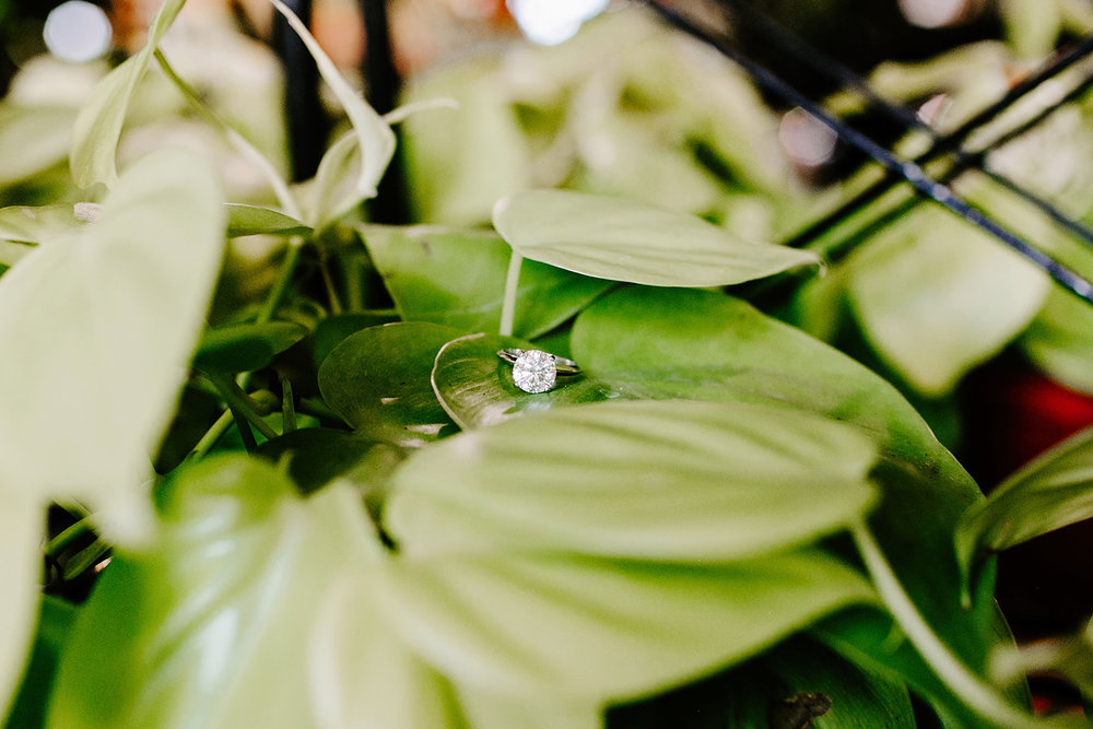 Lindy and JT Proposal at Allisonville Nursery in Indianapolis Indiana by Emily Elyse Wehner Photography LLC-198.jpg