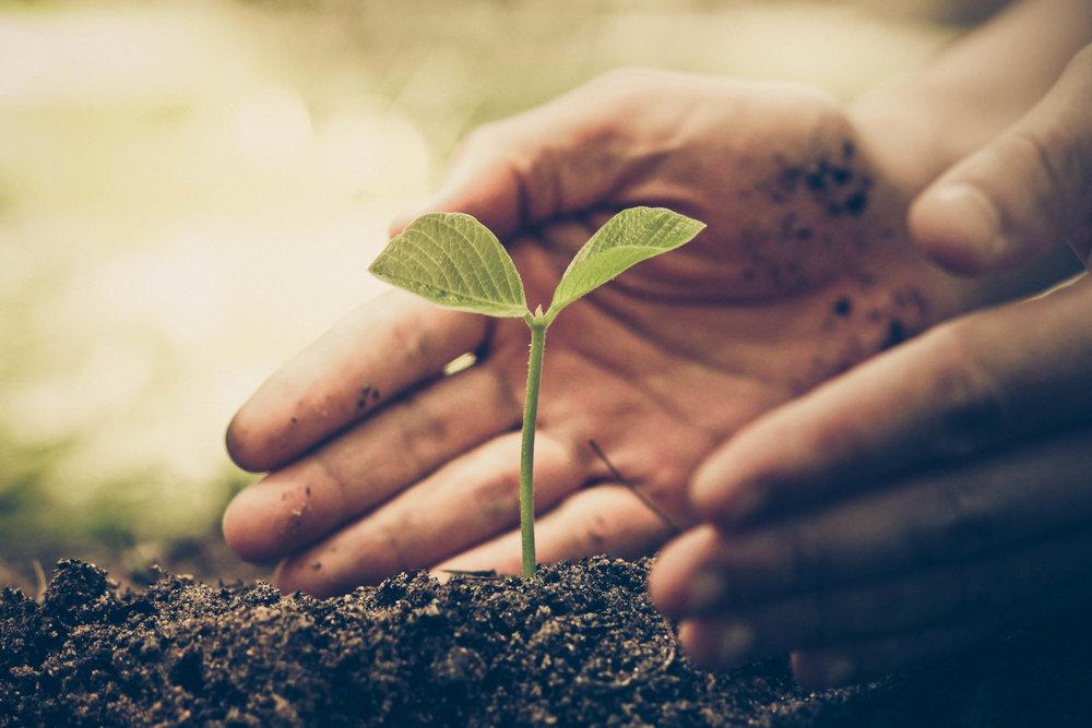 Thrive growth image.jpg