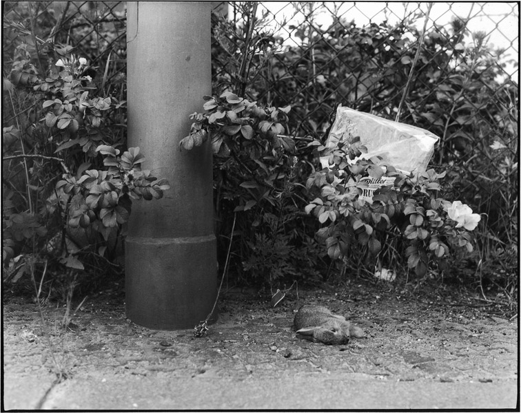 "Hildegard Ochse, from the series ""Stadtvegetation"" (urban vegetation), ca 1978"