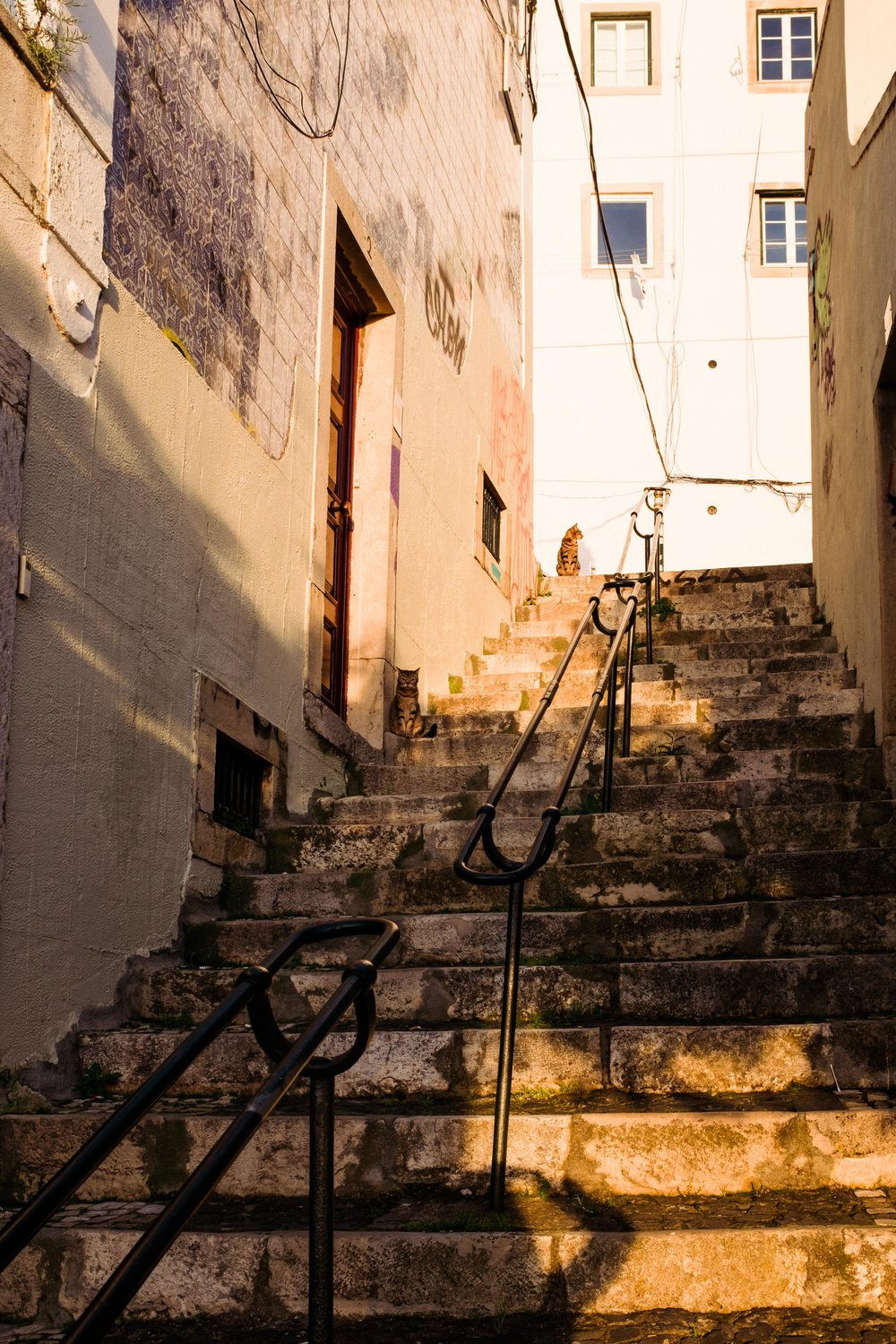 lisbon-portugal-cats-on-stairs