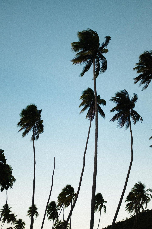 puerto-rico-rincon-7498.jpg