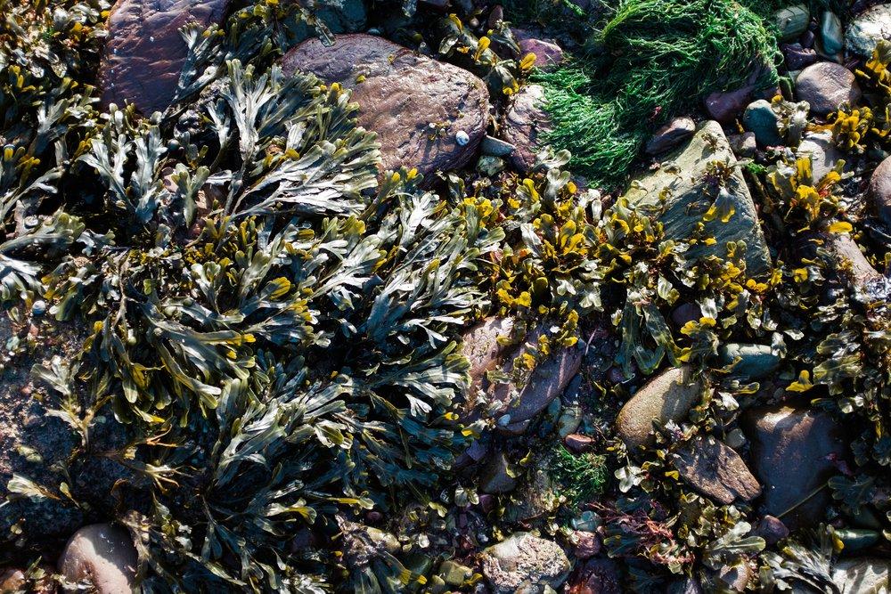 ballycotton-ireland-cliff-walk-5853.jpg