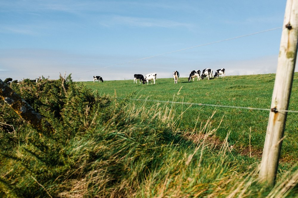 ballycotton-ireland-cliff-walk-5891.jpg