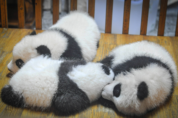 Does meditation turn you into a tired panda? Try a more active style. Image from Stocksnap.io