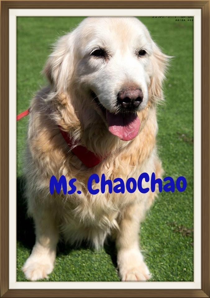 ChaoChao002.jpg