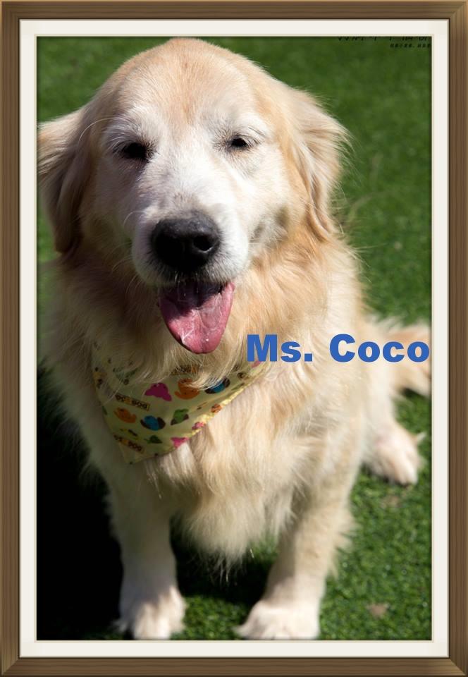 CoCo001.jpg