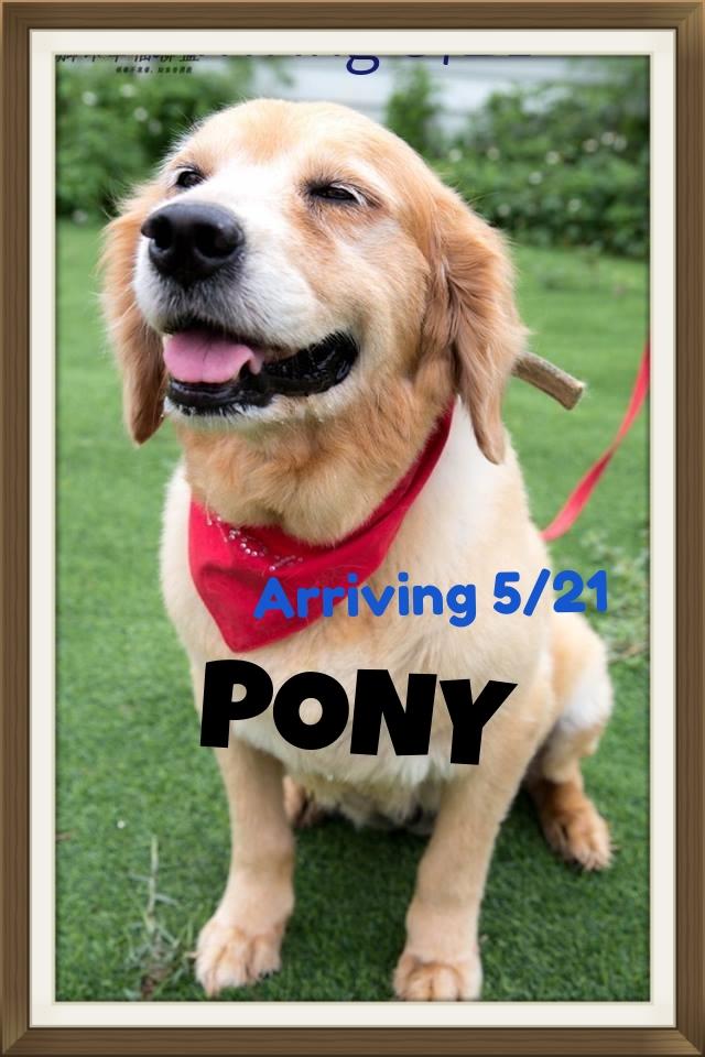 Pony002.jpg