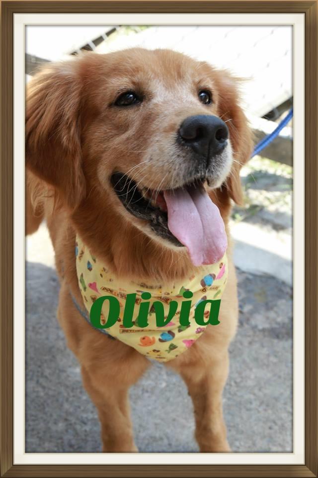 Olivia-1.jpg