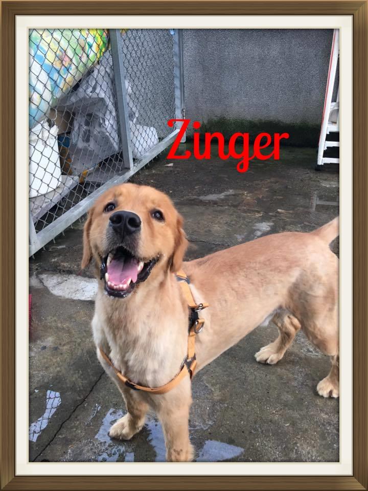 Zinger1.jpg