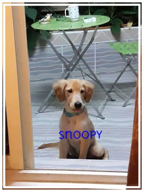 snoopy-1.jpg