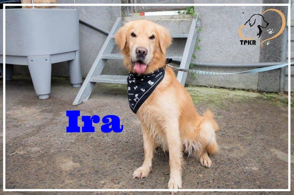 Ira-1.jpg