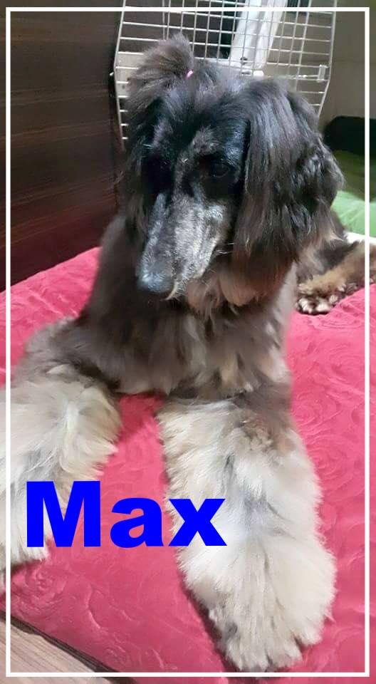 Max-1.jpg