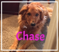 Chase-1.jpg