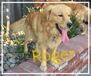 Roger-1.jpg