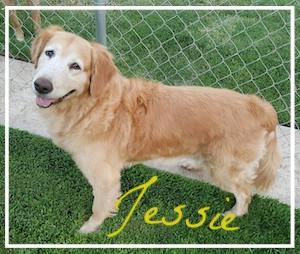jessie-1.jpg