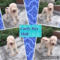 Curly_boy.jpg