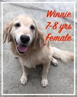 Winnie002.jpeg