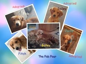 Puppy_Collage.jpg