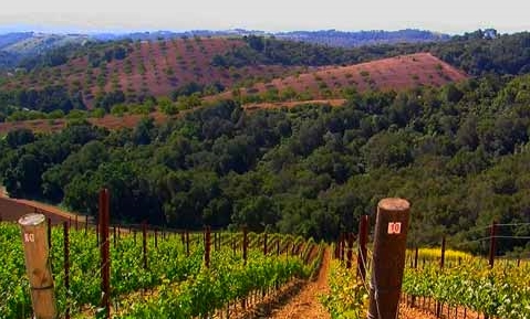 Daou-Vineyards-480x360 copy.jpg