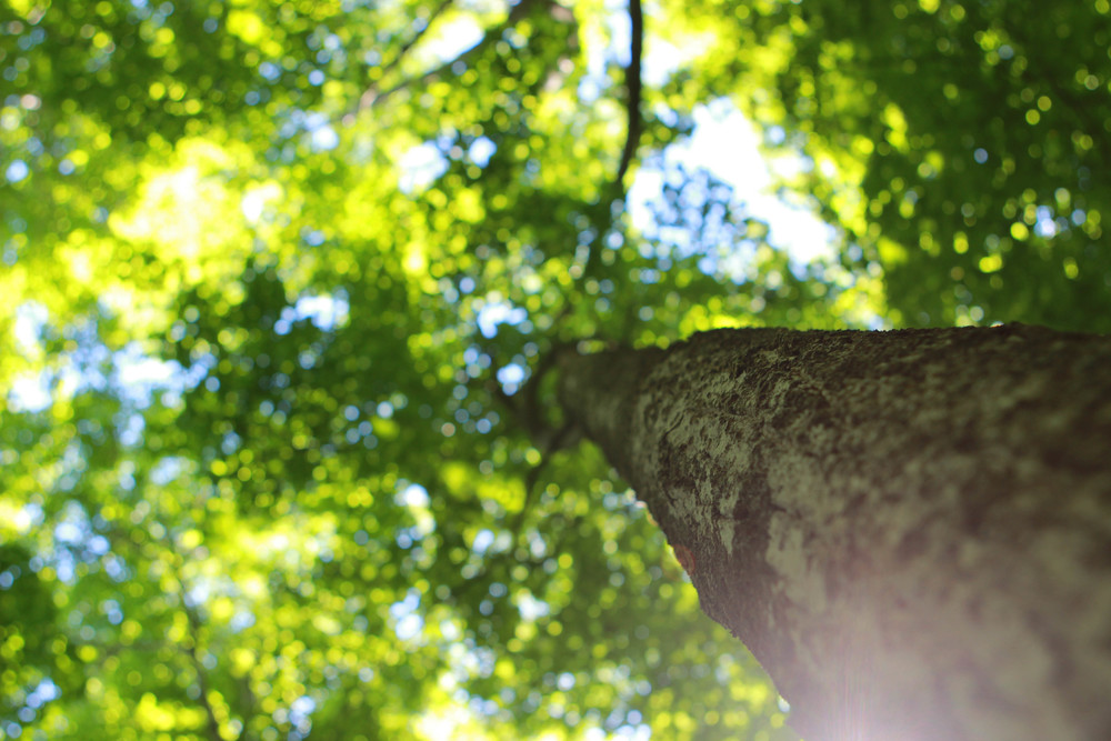 Tree | Bruce Trail | Tobermory, Canada - Jess Rudolph Photography: www.jessrudolph.com