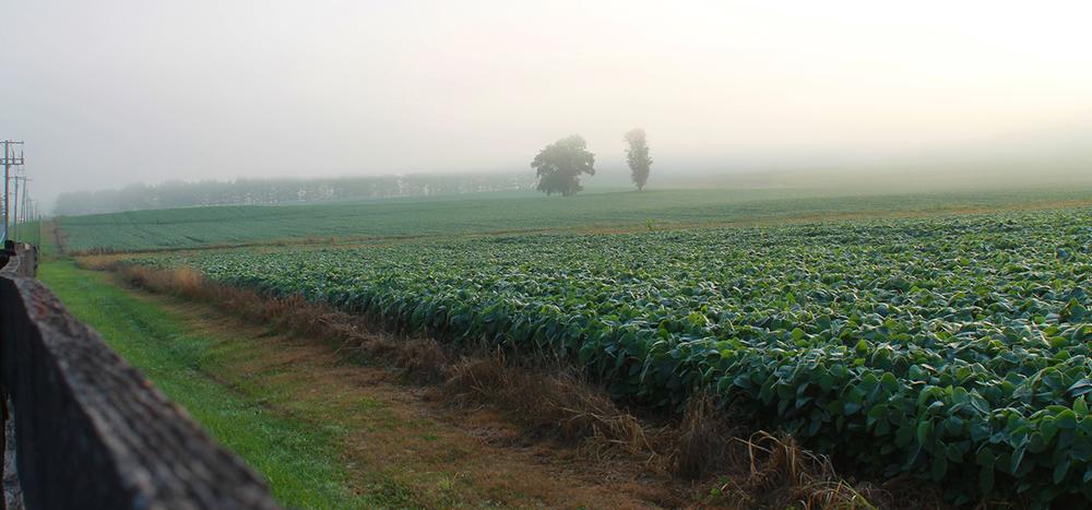 Farm Fog - Jess Rudolph Photography: www.jessrudolph.com