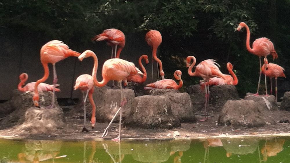 Taken at the Columbus Zoo and Aquarium in Columbus, Ohio