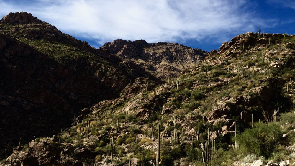 Sabino Canyon. November, 2015. Photo by me.